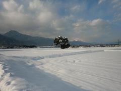 2013.01.16.5.JPG